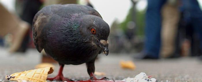 control palomas Ambiente Cero Zaragoza