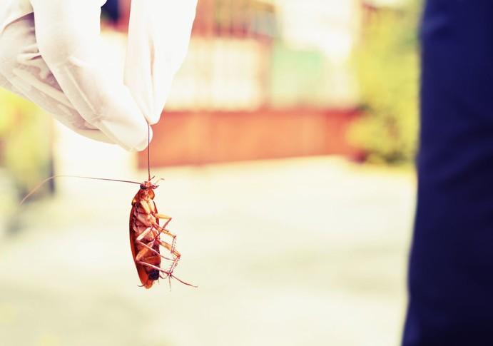 detectar y eliminar cucarachas zaragoza