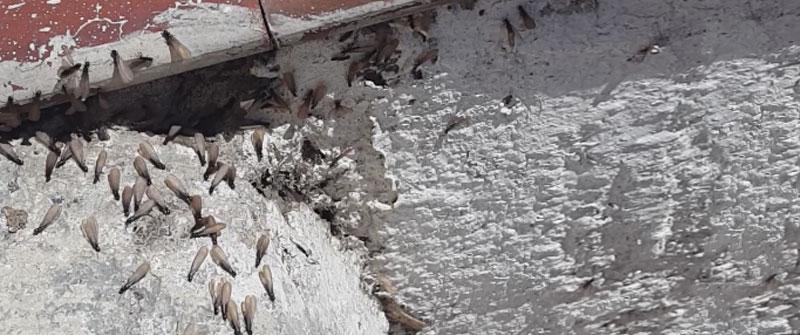 detectar termitas zaragoza
