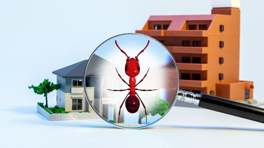 eliminar plagas hormigas Zaragoza