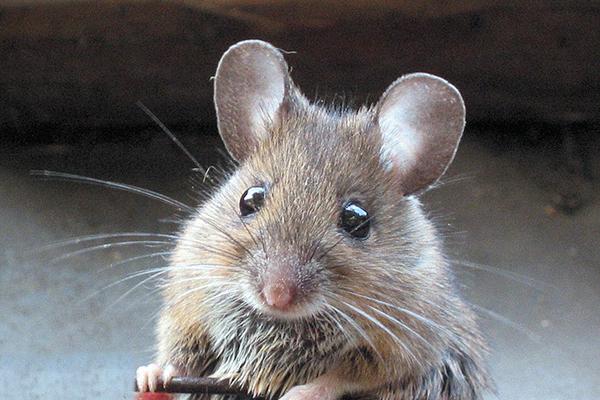 eliminar ratones ambiente cero zaragoza