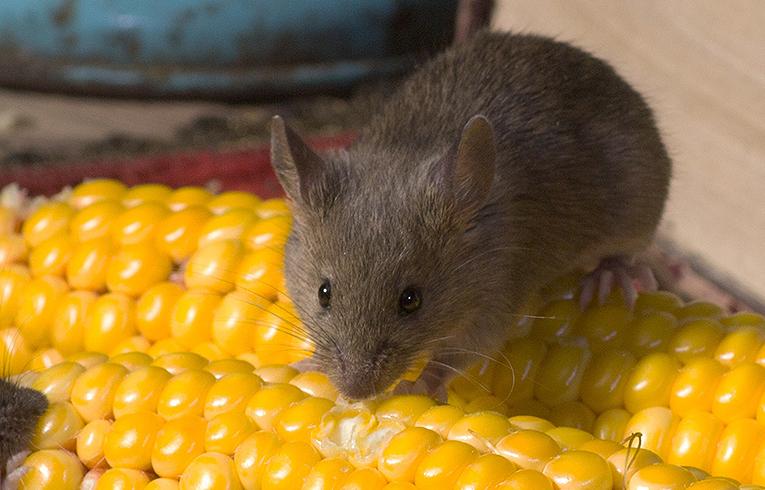 eliminar roedores casa Zaragoza