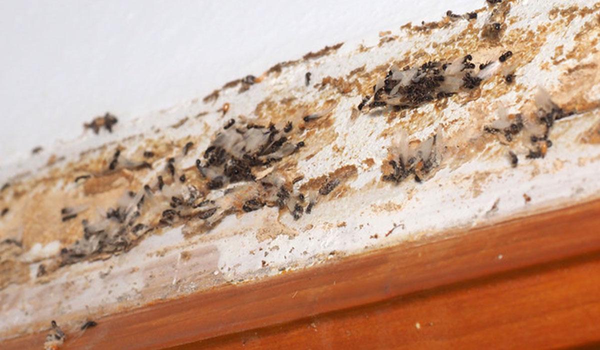 especialistas eliminar termitas Zaragoza