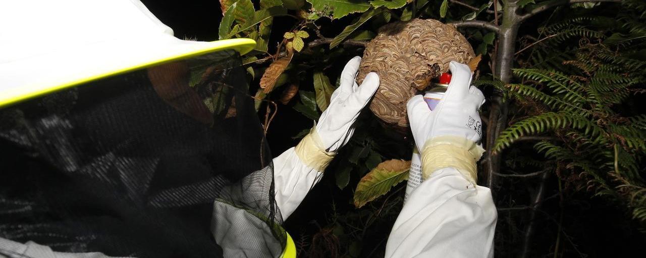 métodos eliminar plagas avispa asiática Zaragoza AMBIENTE CERO