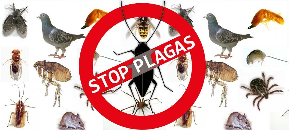 plan control plagas ambientales Zaragoza
