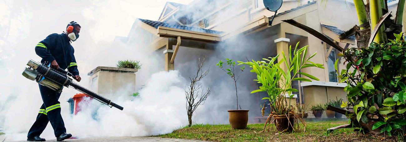 tratamiiento fumigación termitas zaragoza