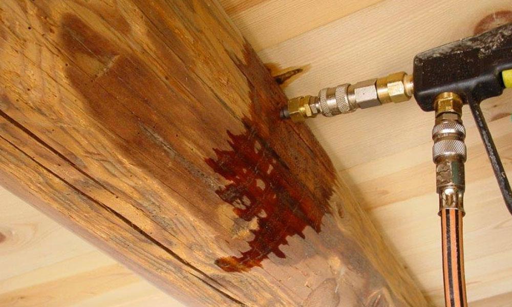 tratamientos plagas madera Zaragoza Ambiente Cero